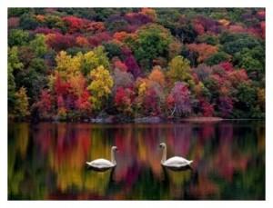 spiritual teacher as mirror
